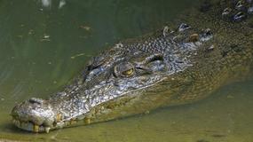 Australia: turyści w rzece pełnej krokodyli