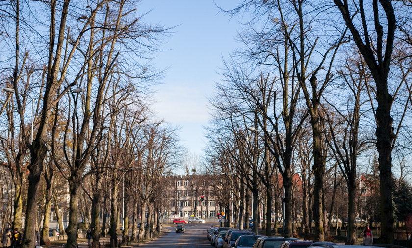 Przycinją drzewa w Gdańsku.