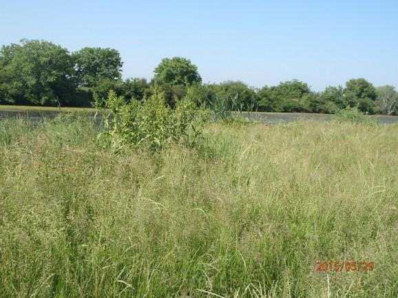 A od zarasle trave, kanal se jedva nazire