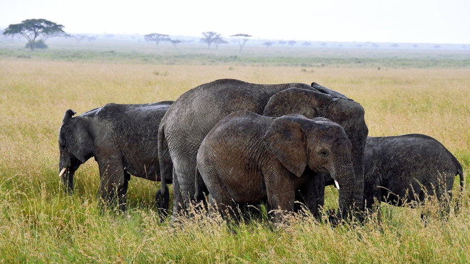 Park Narodowy Serengeti, Tanzania 2021