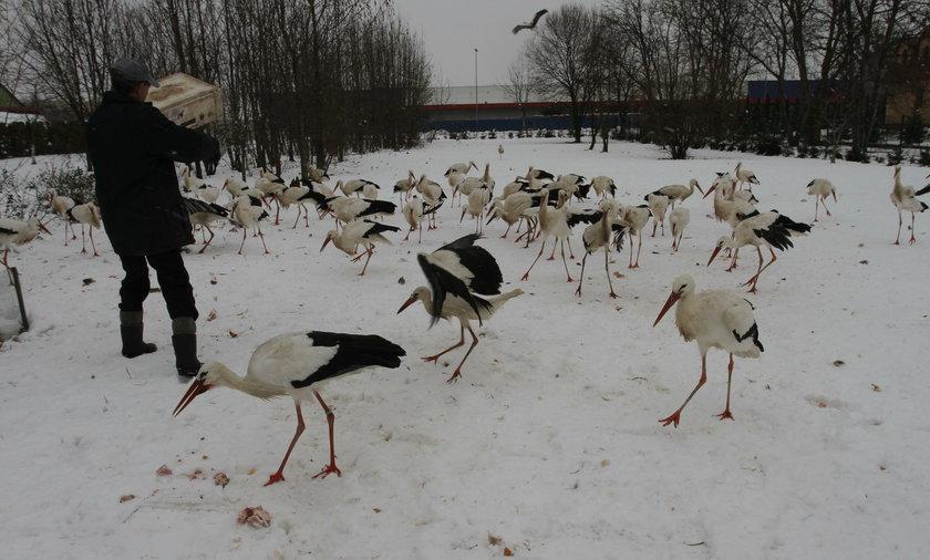 Zimowisko dla bocianów