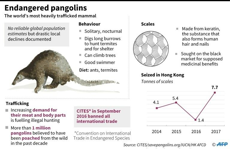 Graphic on pangolins, the world's most heavily trafficked mammals.