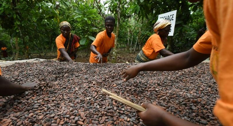 Ghana's President, Akufo-Addo to announce new cocoa price on Oct 1, 2019