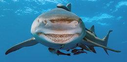 Rekin zaatakował turystkę. Kobieta nie żyje
