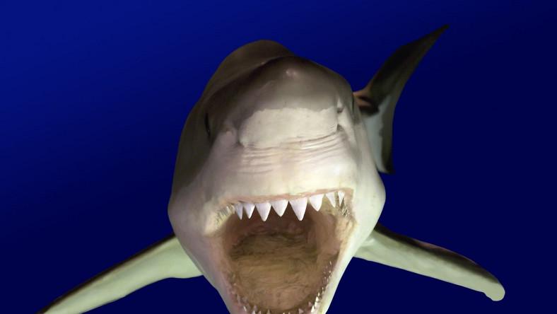 Na Reunion rekiny szaleją