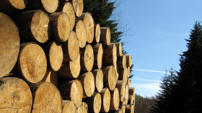Politycy PiS i Samoobrony lobbowali w sprawie drewna?