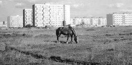 Uratowane ze śmietnika: Archiwalne zdjęcia Bielan i Żoliborza bezpieczne