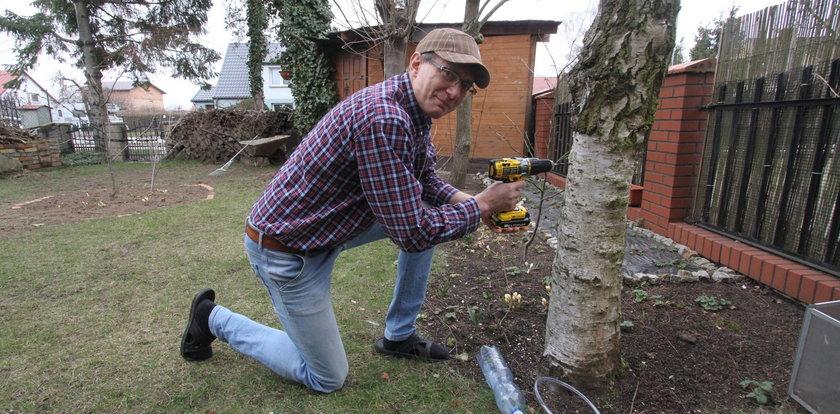 """Pan Piotr lubi popijać sok z drzewa. Ludzie mówią, że to """"eliksir życia"""""""