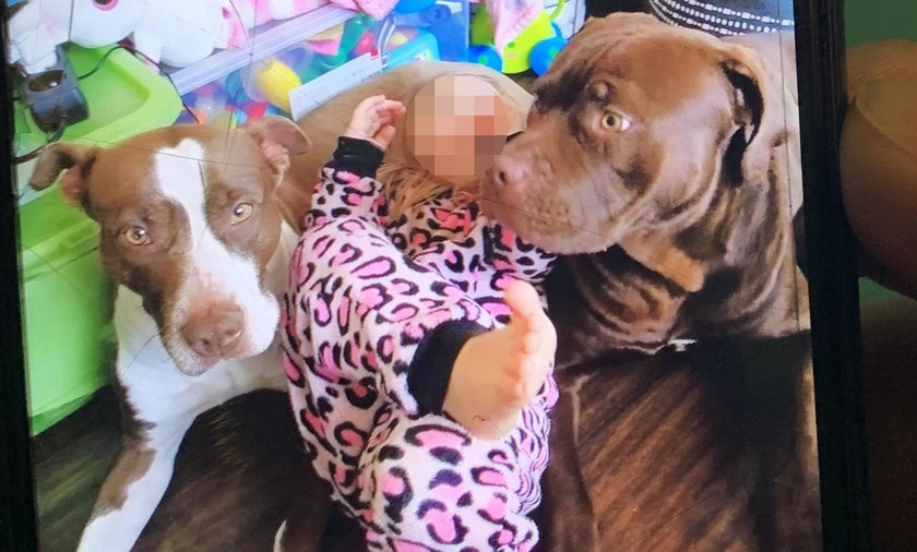 W domu przebywały dwa psy typu pitbull. Pies Joker (na zdjęciu po prawej) rzucił się na Kamila.