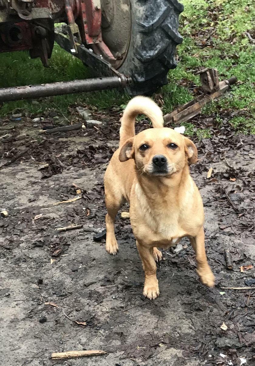Pies Misiek uratował Danielka