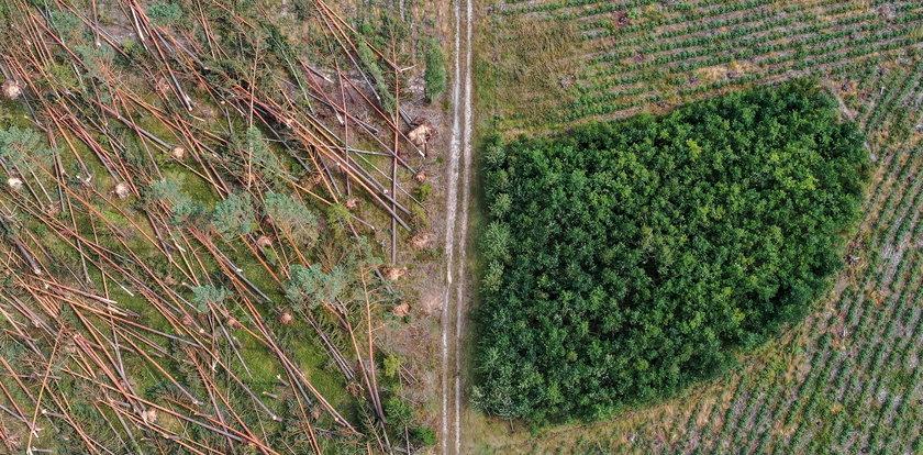 Trąba powietrzna w Borach Tucholskich. Ogrom zniszczeń po przejściu nawałnicy