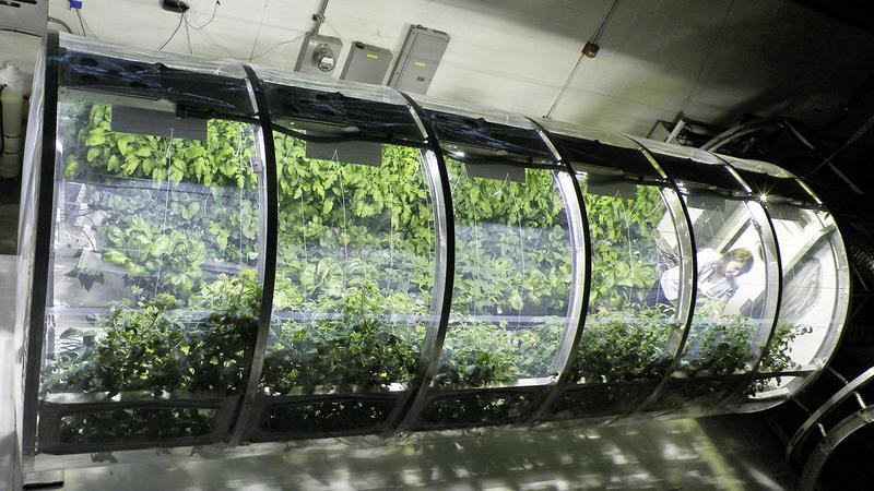Nadmuchiwane szklarnie dla astronautów