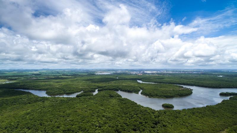 Amazoński las deszczowy