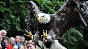 Leśny Park Niespodzianek w Ustroniu - okazja zobaczenia zwierząt w naturalnym środowisku