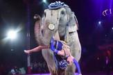Slon, cirkus, sc youtube