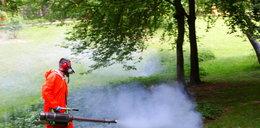 Uwolnią Rzeszów od kleszczy i komarów
