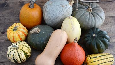How to choose the best pumpkin for cooking