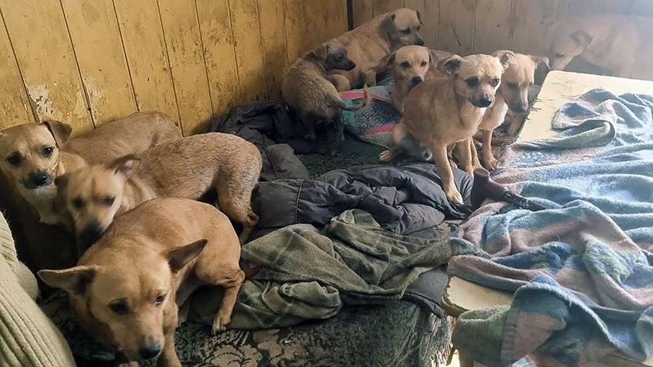 33 psy przetrzymywane w makabrycznych warunkach