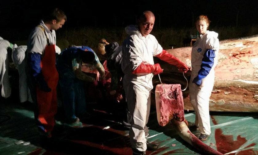 Sekcja zwłok martwego wieloryba