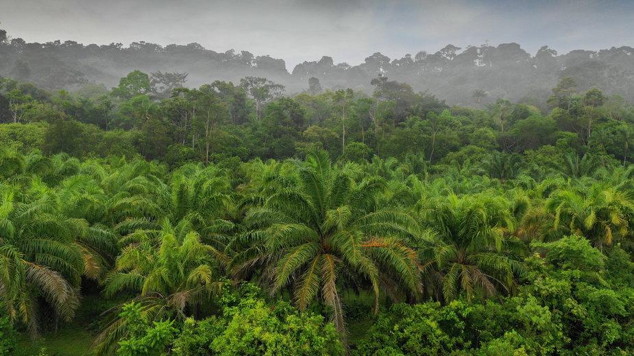 21 mln hektarów dżungli może zostać zniszczonych