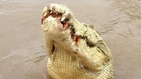 Krokodyl albinos, nazywany Michaelem Jacksonem, zabił wędkarza i sam został zastrzelony