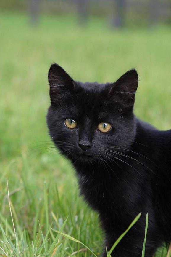 izuzetno uska maca besplatno preuzimanje crne mačke