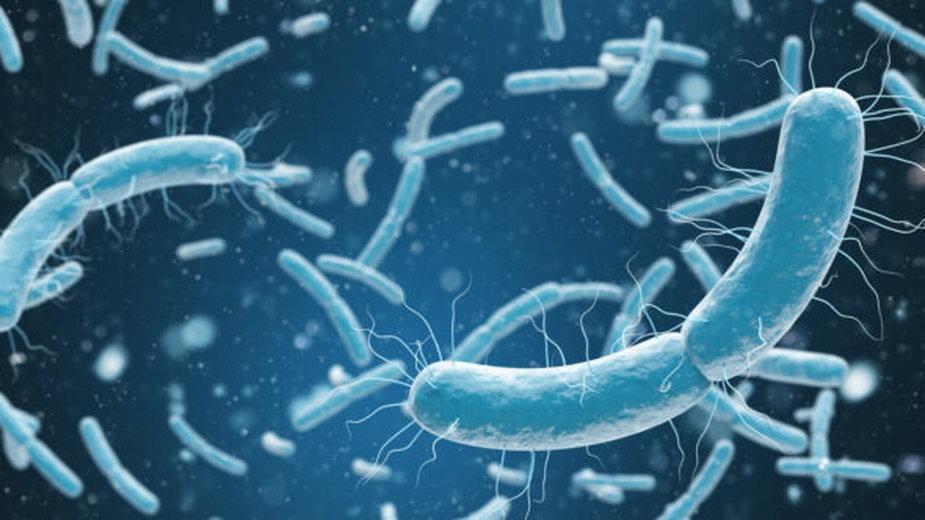 Bakterie. Fot. Freepik