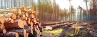 Zamienię za las – podejście drugie, rządowe