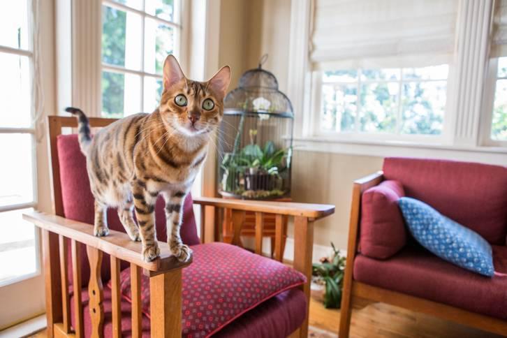 profil randkowy miłośnik kotów