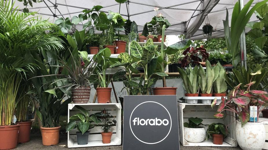 Rośliny z warszawskich biurowców szukają nowych domów