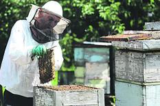 pčele med foto Emil Conkic (2)