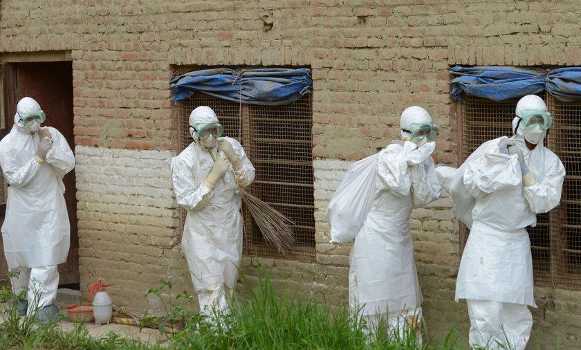 Ptasia grypa znów daje o sobie znać