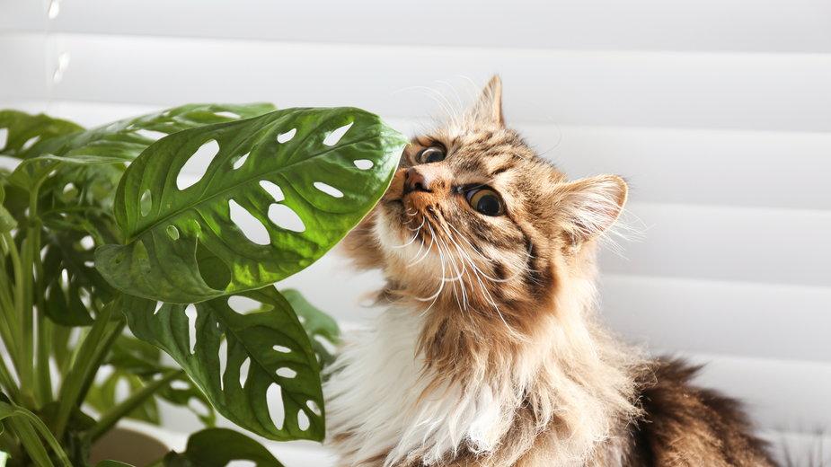 Niektóre rośliny sa trujące dla kotów - New Africa/stock.adobe.com