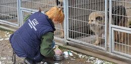 Zostań wolontariuszem w krakowskim schronisku