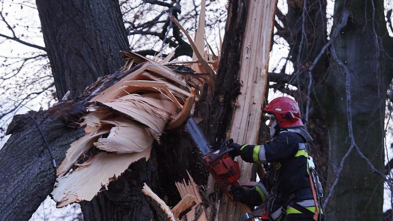 Strażacy usuwają połamane drzewo, które uszkodziło linię energetyczną w Rumii