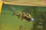 Ribe roboti