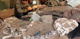 Niesamowite odkrycie. Doskonale zachowane szczątki nieznanego dinozaura