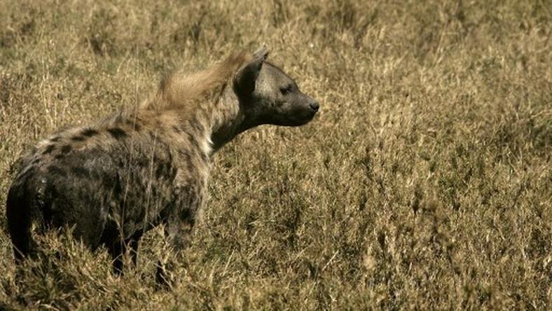 Wycieczka europarlamentarzystów na kenijskie safari może sporo kosztować