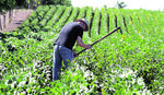 ORGANSKA BAŠTA DONOSI 12.000 EVRA GODIŠNJE Uzgoj povrća može biti UNOSAN BIZNIS i na manjoj površini