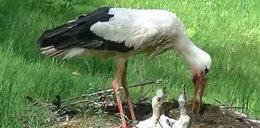 Młode zwierzęta w Nowym Zoo