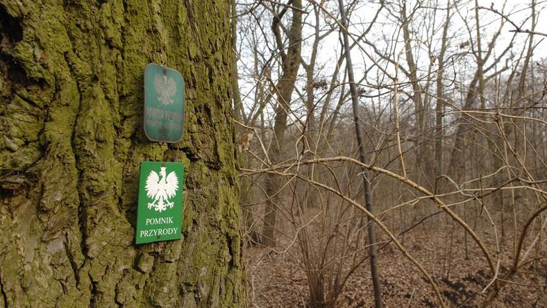 Na Białołęce zostanie utworzony największy w mieście zespół przyrodniczo-krajobrazowy