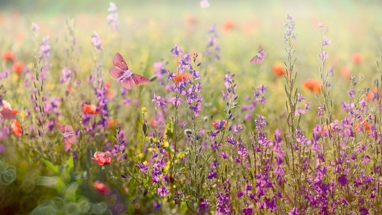 Łąka, natura, lato
