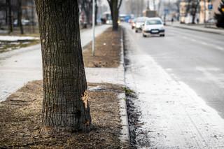 Prokuratura już zna ustalenia biegłych ws. wypadku z udziałem auta Beaty Szydło