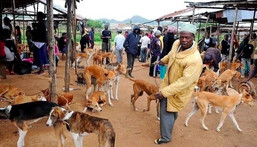Government petitioned to ban trade, consumption of dog & cat meat