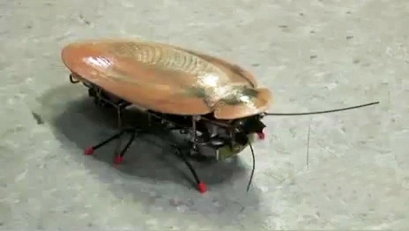 Robot karaluch
