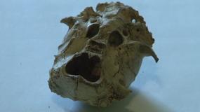 W okolicach Wałbrzycha znaleziono tajemniczą czaszkę