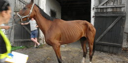 Dramat koni w stadninie w Posadowie
