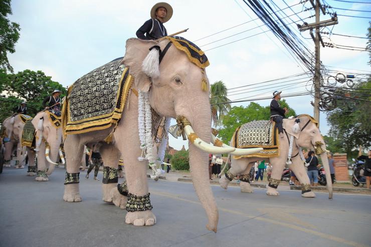 beli slon foto Skynavin shutterstock