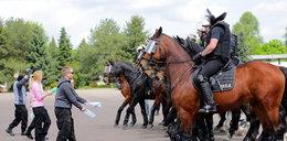 Konie gotowe na paradę i do szarży