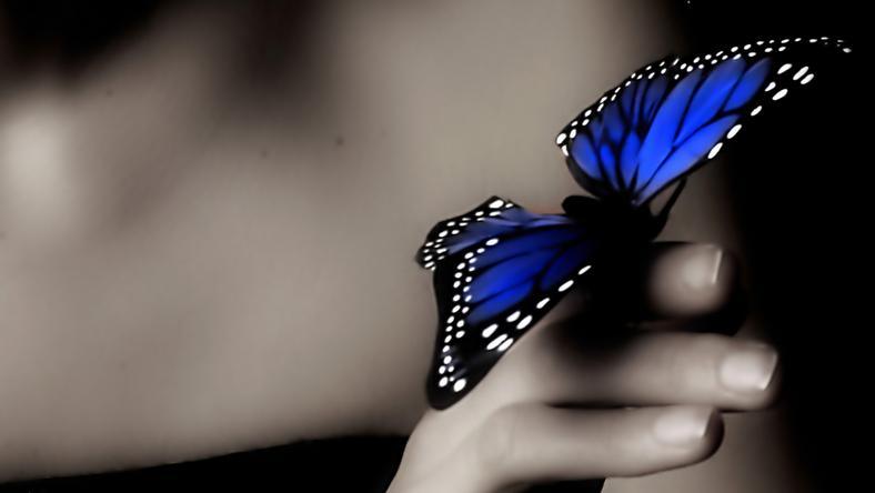 Motyl - znak od tych, którzy odeszli?